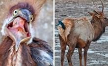 Ova Facebook grupa posvećena je fotkama divljih životinja koje su toliko loše da su dobre