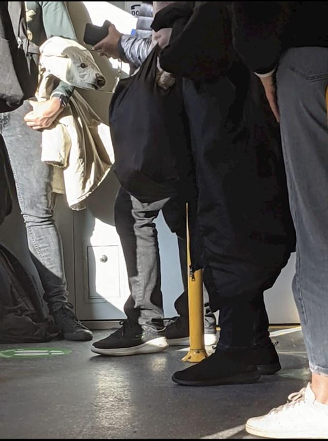 """""""Fotkao sam ovo dok sam bio u vlaku. Bijela jakna ima sličnosti s polarnim medvjedom. """""""