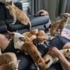 Nakon što ga je chihuahua spasila, posvetio je svoj život njihovom spašavanju