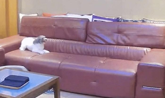 Ovaj pas ne smije na kauč, pogledajte kako se zabavlja kada misli da ga nitko ne gleda