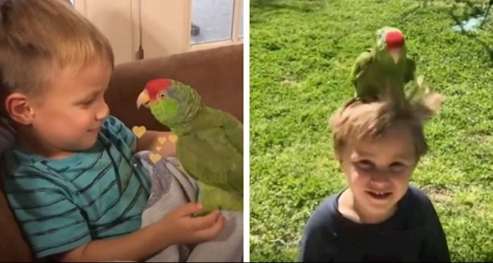 VIDEO Papiga se ne odvaja od svog omiljenog dječaka, njihova povezanost je nevjerojatna
