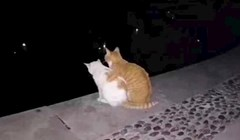 Ovako romantične mačke još nismo vidjeli, oduševiti će vas