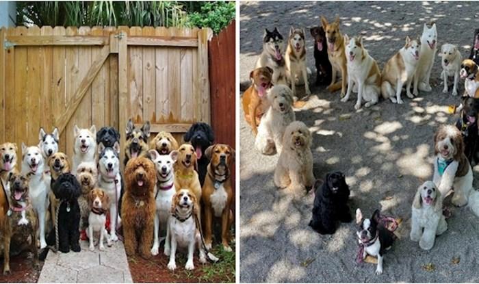 Ovaj vrtić za pse radi gotovo nemoguće, stvara savršene grupne fotografije pasa