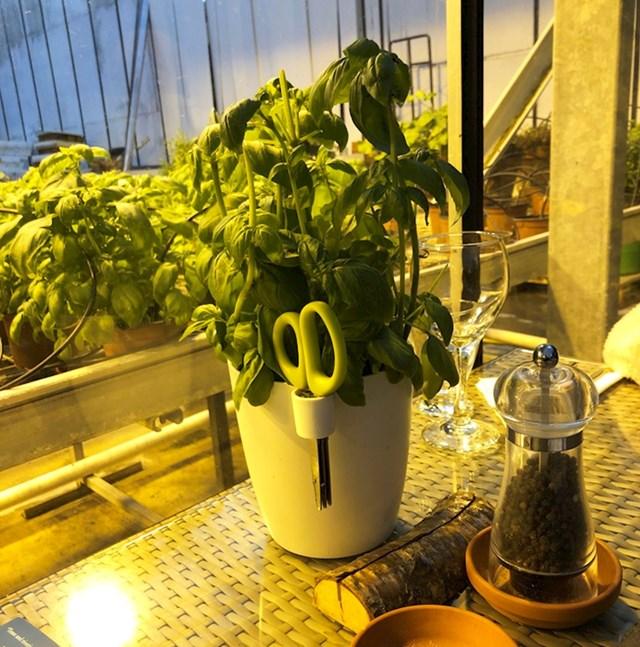 Ovaj restoran ima biljke bosiljka za svakim stolom, tako da možete rezati svježi bosiljak za svoju juhu.