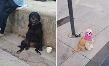 """""""Pasi isprid dućana"""" davno su osvojili naša srca, ovo su nama najdraži"""