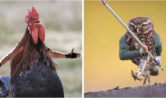 Netko je na ptice montirao ljudske ruke i rezultat je presmiješan