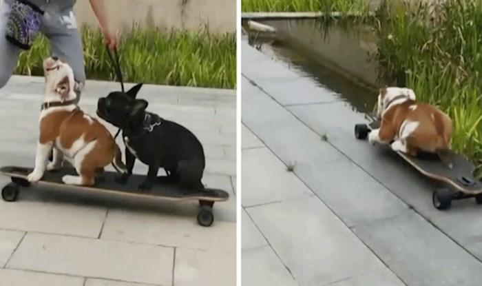 Tijekom snimanja ova dva talentirana psa, nešto je pošlo po zlu