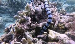 VIDEO Nevjerojatni susret ronioca i jedne od najotrovnijih morskih životinja
