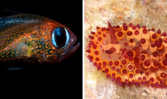15 fotografija novih vrsta koje su znanstvenici otkrili u 2019. godini