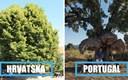 11 europskih stabla s najzanimljivijim pričama