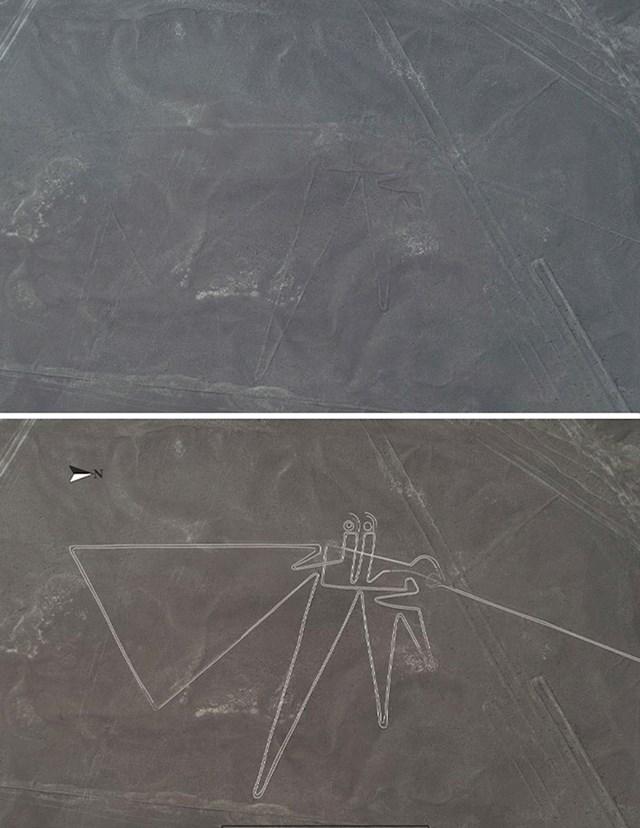 Znanstvenici su otkrili više od 140 novih Nazca linija, uključujući i ovu pticu.