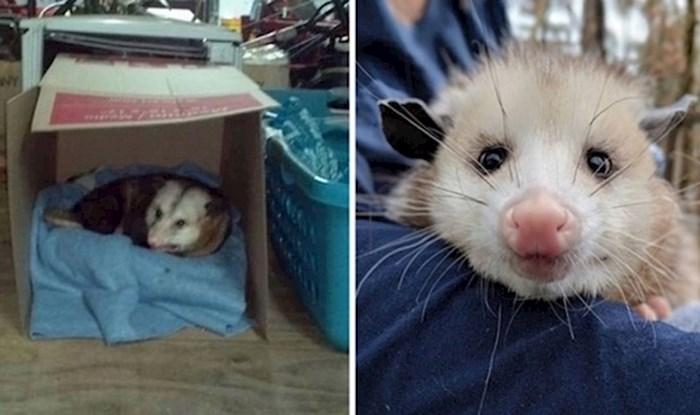 Žena koja je dopustila oposumu da ostane u njezinoj garaži postala je viralni hit
