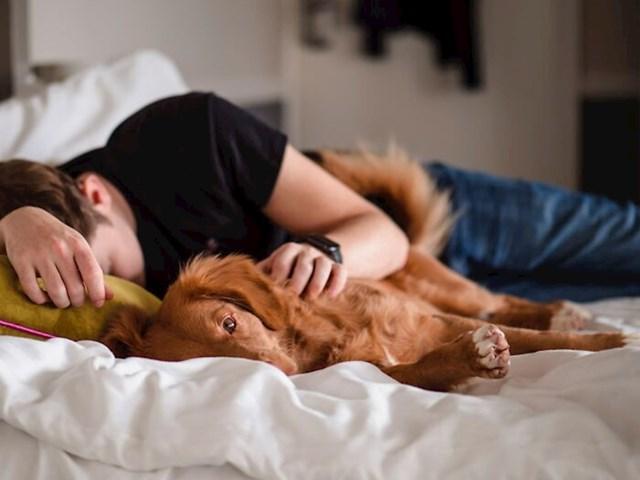 Spavanje s vašim psom može vam pomoći i ako imate nesanicu.