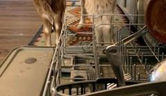 Ova žena ima dva pomoćnika u kuhinji, pogledajte koliko su slatki