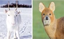 15 nevjerojatnih fotografija rijetkih životinja za koje vjerojatno nikad niste čuli