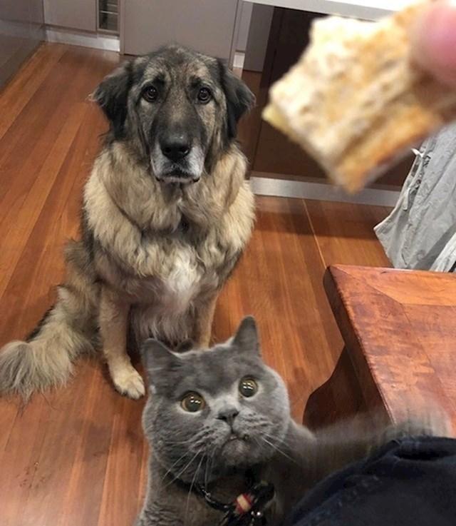 Dok neke životinje strpljivo čekaju da se dogodi nešto dobro, mačke samo ostvaruju svoje snove