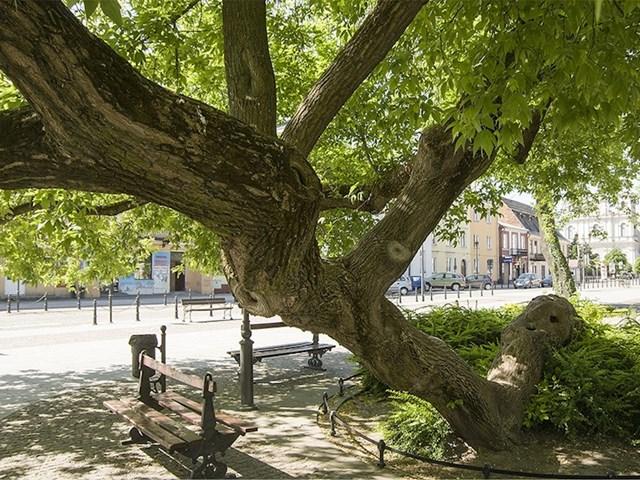 #5 Drveće na koljenima, Krasnystaw, Poljska