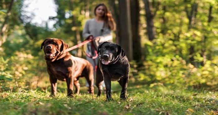 Vlasnici pasa dobiju glavobolju od ove fotografije