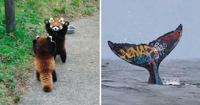 Ljudi dijele zabavne životinjske činjenice za koje ćete poželjeti da su stvarne