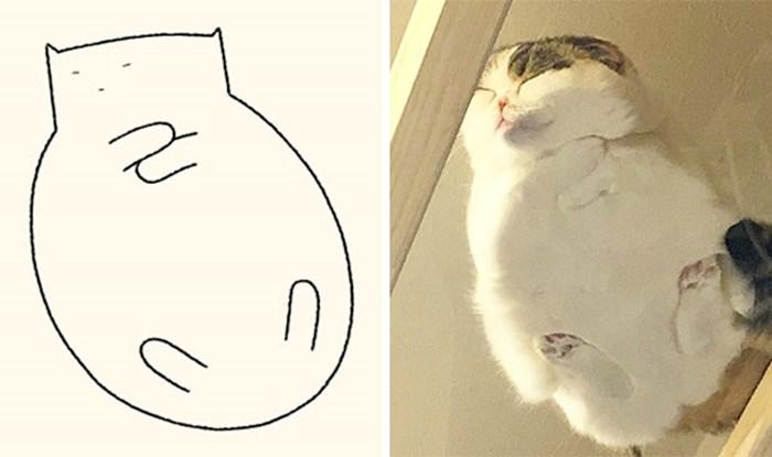 16 preslatkih crteža nastalih na temelju fotografija mačaka