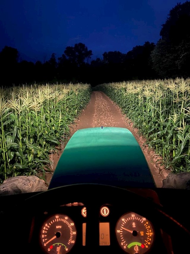"""""""Rano jutro na polju kukuruza"""""""