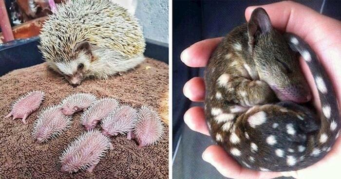 +25 mladunaca koji su toliko slatki da će vam uljepšati početak tjedna