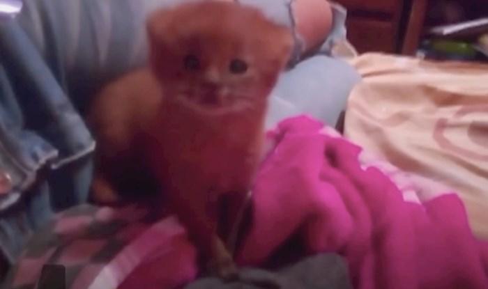 VIDEO Žena je pronašla napuštenog mačića i čuvala ga mjesecima, a onda je saznala da je divlja puma