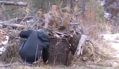 VIDEO Zamke za životinje okrutna su stvar, pogledajte tko je zalutao u ovu