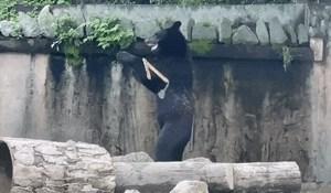 Medvjed koji ima pokrete kao pravi ninja oduševio je internet