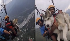 VIDEO Sibirski haski uživa u paraglajdingu na 3500 metara