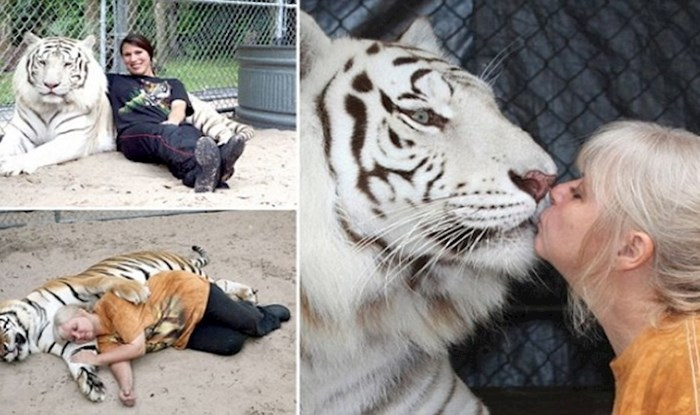 VIDEO Ovo su njezini kućni ljubimci, žena u dvorištu ima dva bengalska tigra