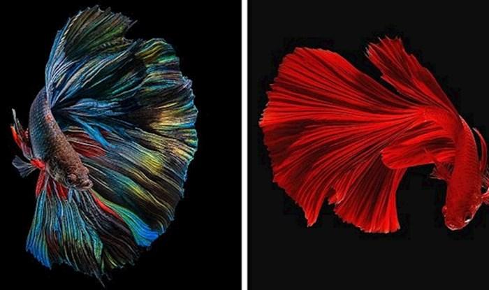 15 fotografija zadivljujućih vrsta riba različitih boja koje otkrivaju njihove karatere