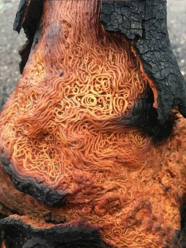 """""""Spaljeno drvo koje izgleda kao špageti!"""""""