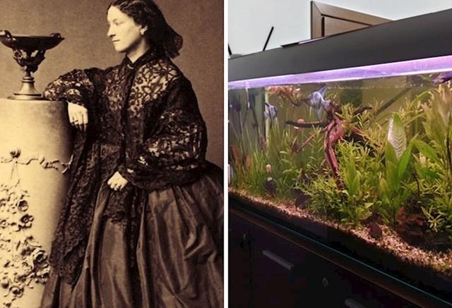 7. Jeanne Villepreux-Power izumila je akvarij .