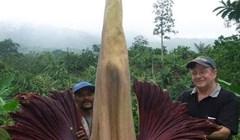 Ovo je jedna od najvećih biljaka na svijetu, procvjeta svakih 40 godina tijekom četiri dana