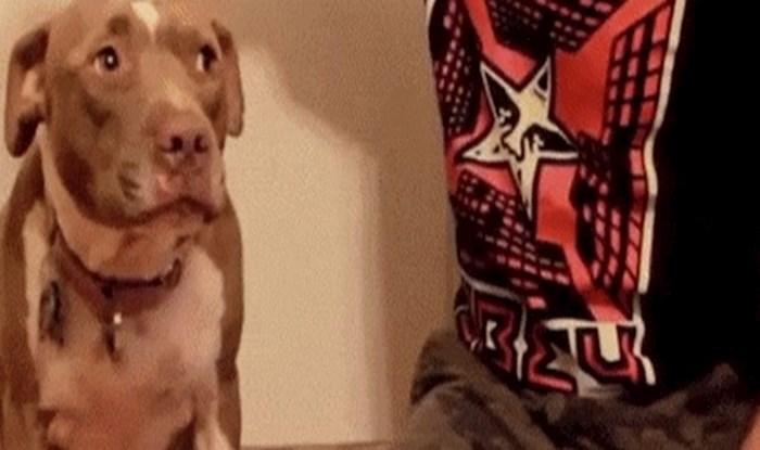 Ovaj pas je pokazao nevjerojatnu dozu discipline, pogledajte što je izveo sa svojim vlasnikom