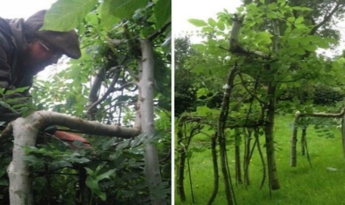 Drveće koje raste u namještaj jedinstveno je umjetničko djelo čovjeka i prirode