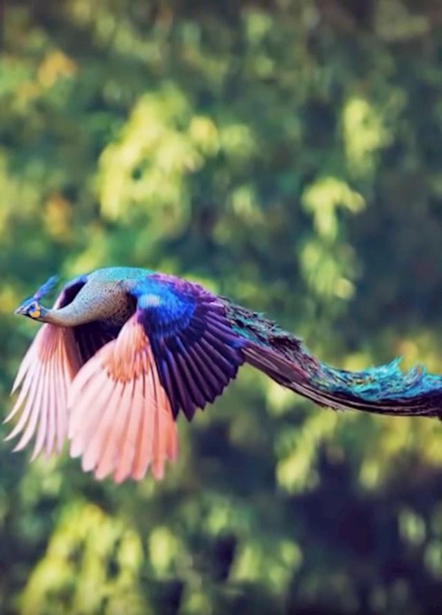 #1 Paun u letu izgleda prekrasno!