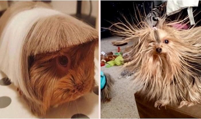 15 životinja koje bi hitno trebale posjetiti frizerski salon