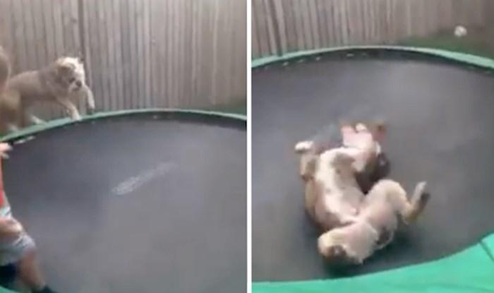 VIDEO Veselje ovog buldoga na trampolinu teško je opisati; ovo jednostavno morate vidjeti