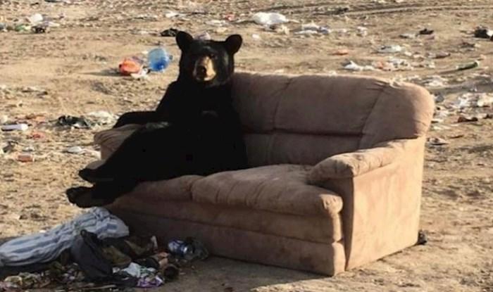 Oduševljeni crni medvjed opustio se na kauču usred odlagališta otpada