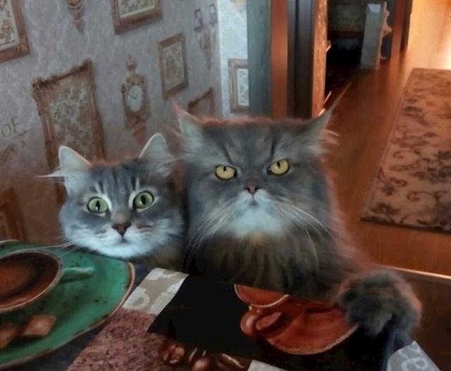 Mačke su majstori hipnoze. Inače, kako bi nas natjerale da radimo što god žele?