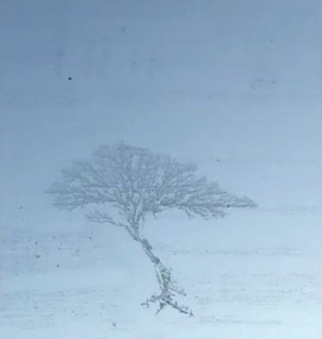 #1 Jato ptica u obliku stabla.