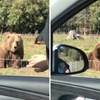 VIDEO Žena je mahnula medvjedu, ali nije očekivala da bi joj mogao i odgovorit