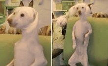 Ovaj pas svojim pokretima uspio je svu pažnju svaliti na sebe