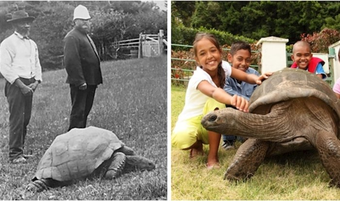 Upoznajte najstariju životinju na svijetu - Jonathan ima 188 godina!
