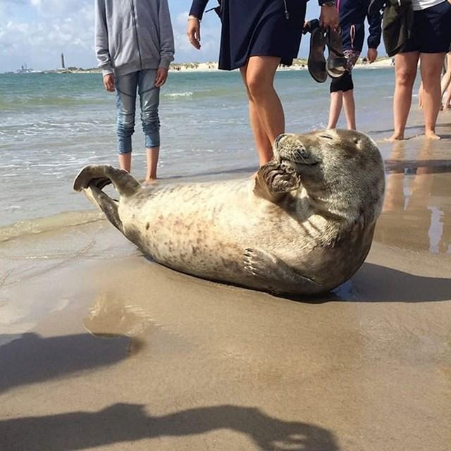 #9 Od svih životinja koje vole sunčanje, prosječni tuljan ima najvišu razinu samopouzdanja