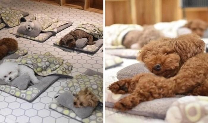 Pogledajte preslatke pse koji odmaraju u vrtiću dok su njihovi vlasnici na poslu