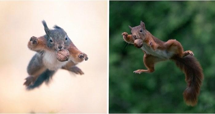 Proveo je 5 godina fotkajući vjeverice, preslatke male akrobate