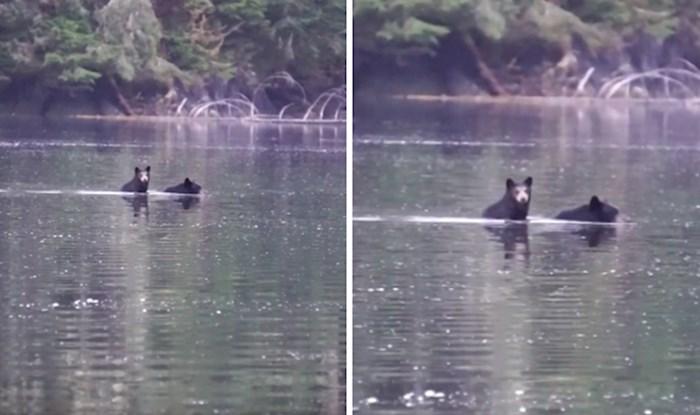 VIDEO Preslatki medvjedić ovog puta preko zaljeva ide na majčinim leđima